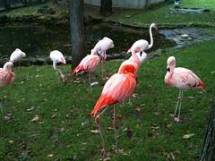 stork(0.0), white stork(0.0), wildlife(0.0), animal(1.0), fauna(1.0), ciconiiformes(1.0), beak(1.0), flamingo(1.0), bird(1.0),