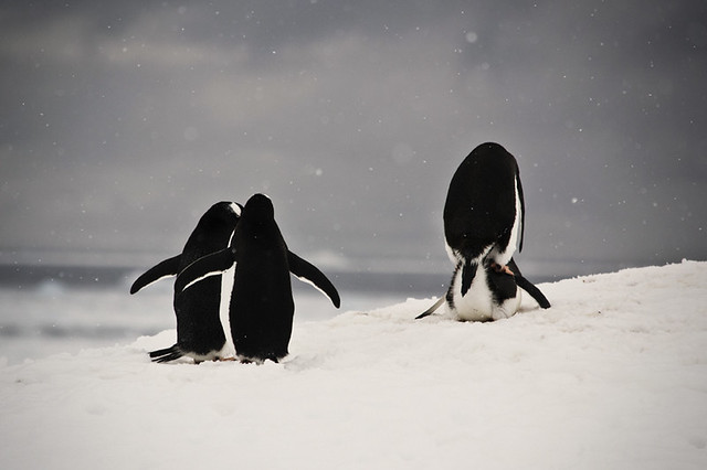 Antarctica 2011 - Live Show