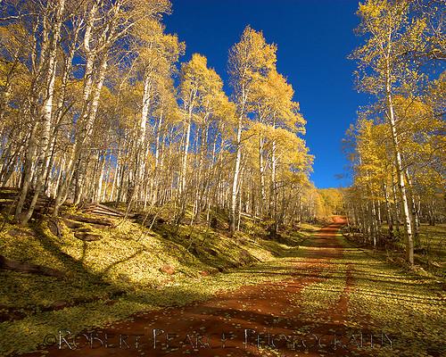 Kolob Country Road, Utah