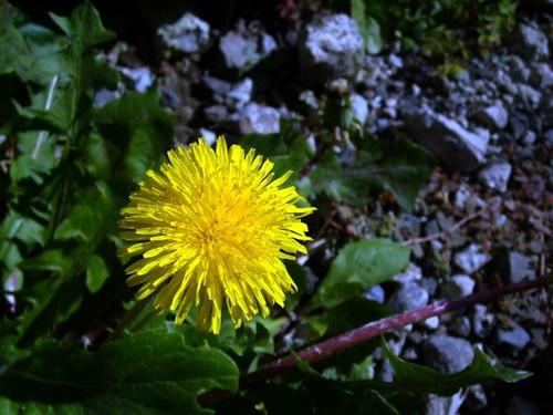 flower 054