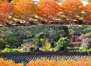 Fall in Getty Garden