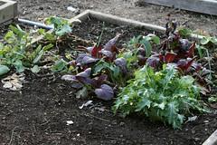 winter gardens 051
