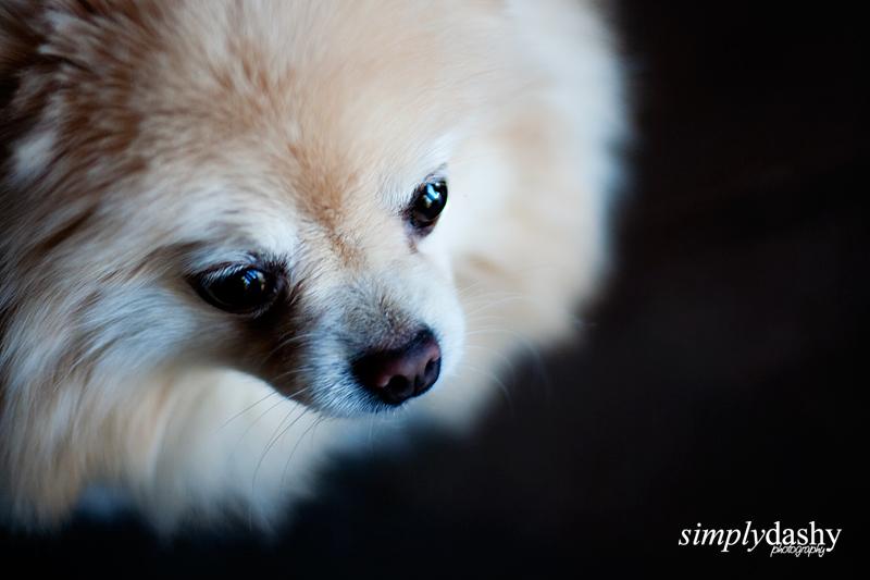 04_SanRamonPhotographer_FamilyPortraits