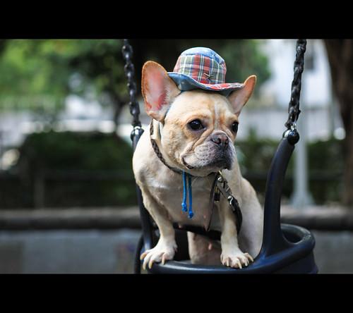 [dog] swing