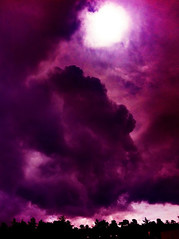 Living Within the Purple