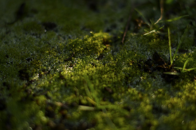 frost on moss