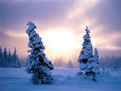 [フリー画像素材] 自然風景, 樹木, 雪 ID:201112140600