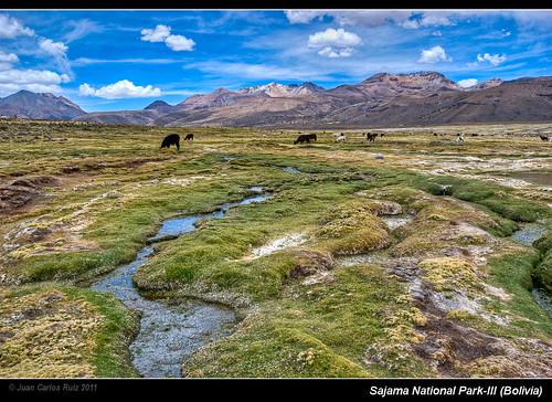 park parque landscape volcano llama bolivia national nacional hdr altiplano volcan oruro vicuña sajama