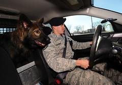 automobile(1.0), dog(1.0), vehicle(1.0), pet(1.0), police dog(1.0),