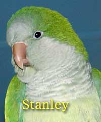 Stanley Quaker Parrot