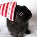 Santa Bun! by Jeni Baker   In Color Order