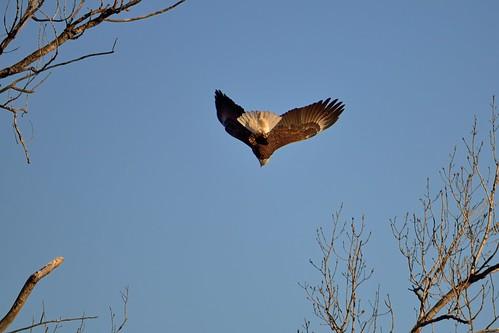 Eagle Butt DSC_1807