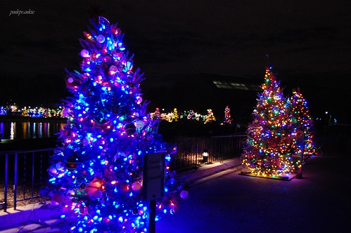 Brookfield Zoo Holiday Magic by pinkprankie