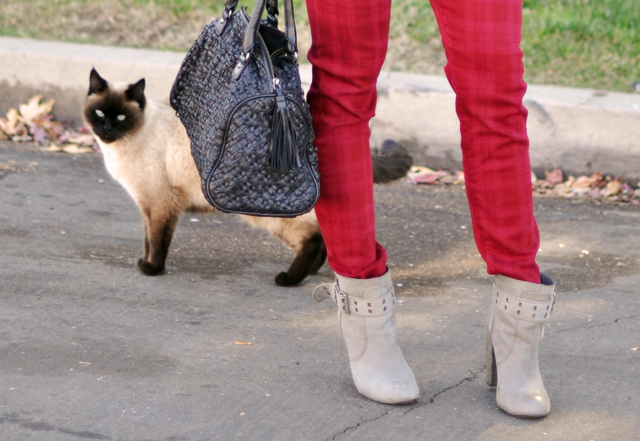 red pants-gray boots-black bag -cat