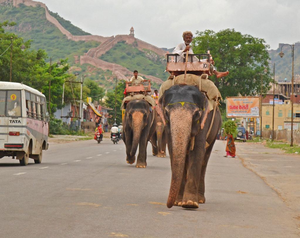 Слоны пошли обедать.