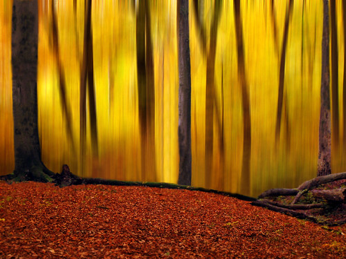 Batikart's Forest
