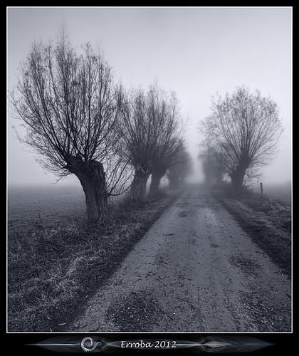 trees mist field fog sunrise canon blackwhite belgium belgique belgië 1020mm erlend willows muizen 60d erroba robaye