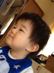 満足げな顔のとらちゃん (2012/1/1)