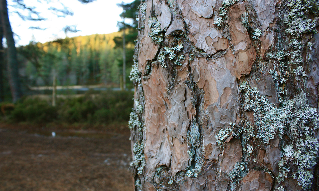 Bark and Lichen
