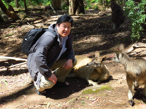 wallaby & me