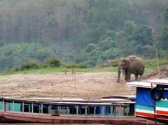 Olifant langs de Mekong