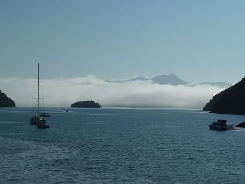 Picton Harbour mist