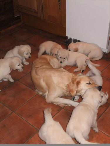 annie puppies 350 by StephBarry