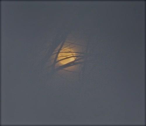 Wolf Moon 03