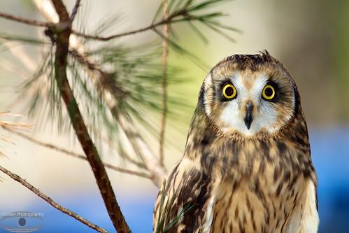 Carolina Raptor Center Owl 14/366
