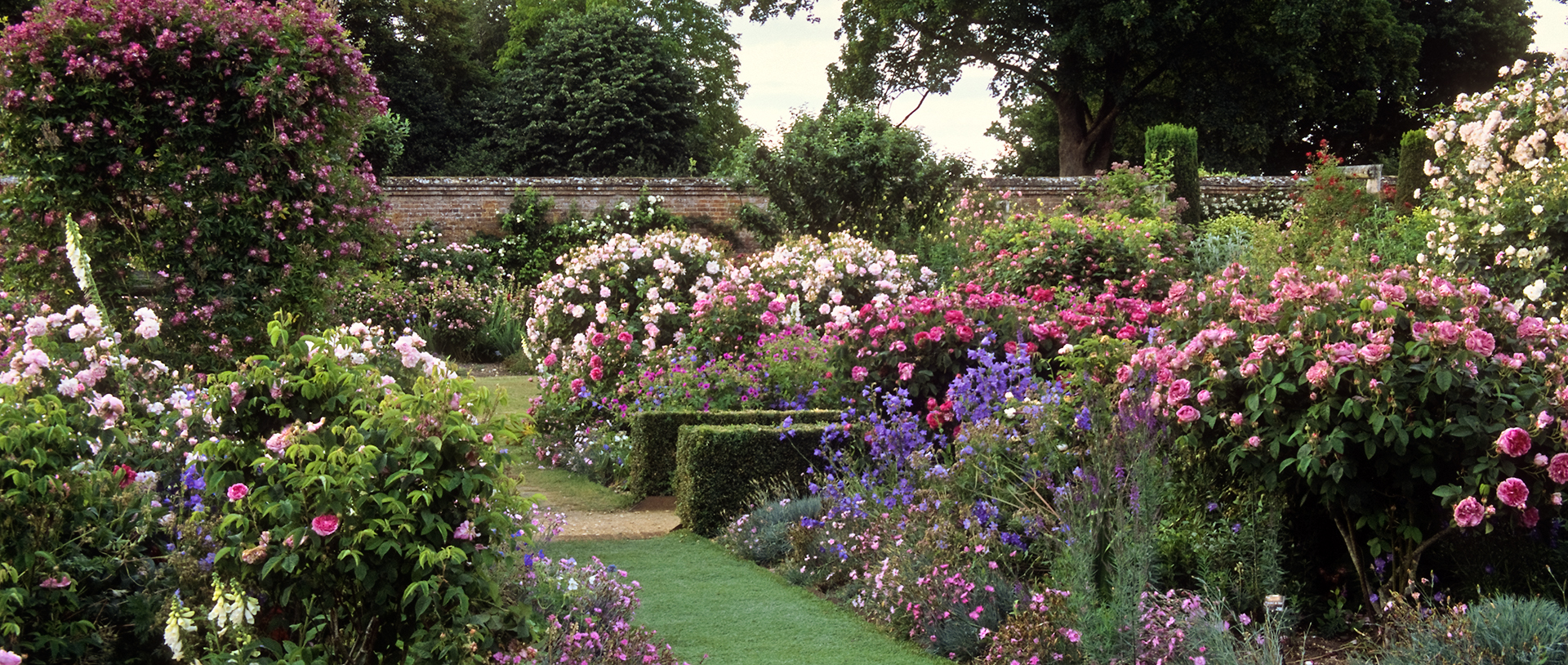 Roses In Garden: Mottisfont Abbey Rose Gardens, Hampshire, UK