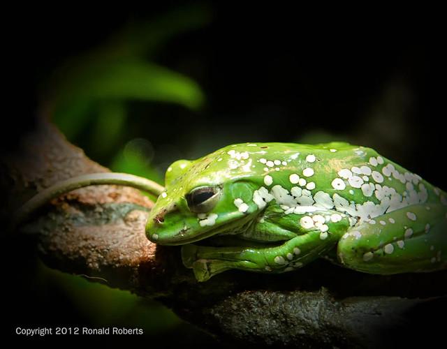 Frog - Georgia Aquarium Flickr - Photo Sharing!