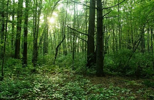 wood sun tree green forest woodland earth neighborhood taylor land hood bor neigh 2011 burnes