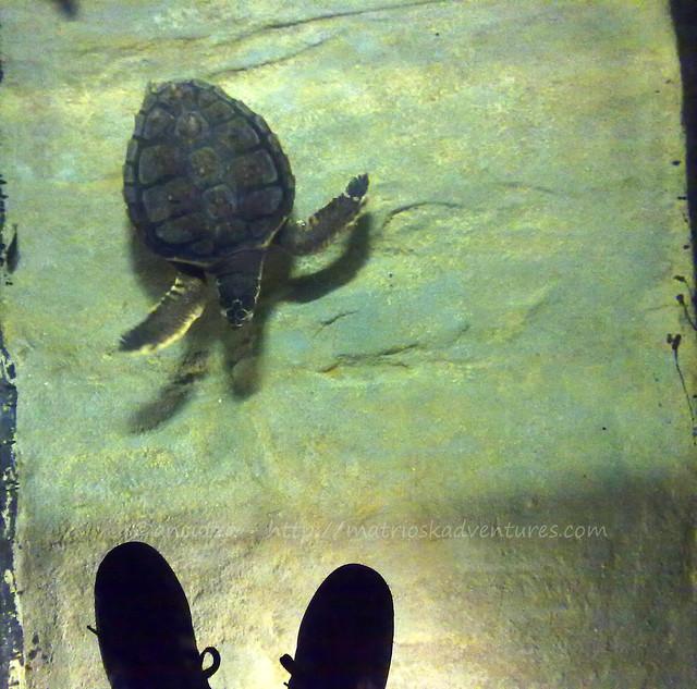 foto Tartaruga acquario lisbona
