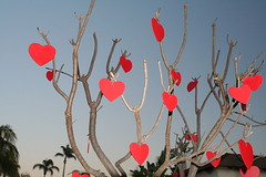 6757841495 314fe37ebc m Plant a tree for your valentine   25% off during February
