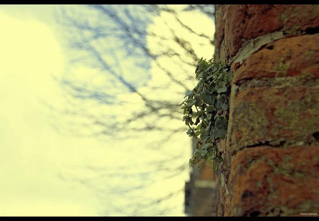 Grown skyhigh~Explored 27012012