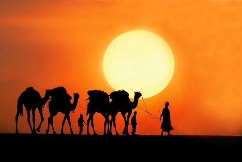 life travel sunset india camels thardesert