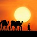 Desert life by Tati@