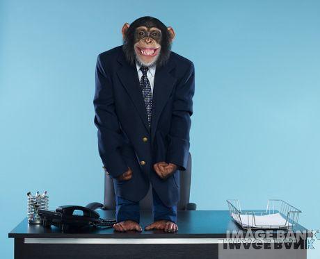 B Monkey Film Monkey Business suit |...