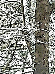 Sunlight on Snowy Branches (Digital Woodcut) by randubnick
