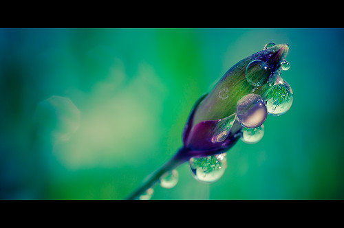 Drops dreams 2