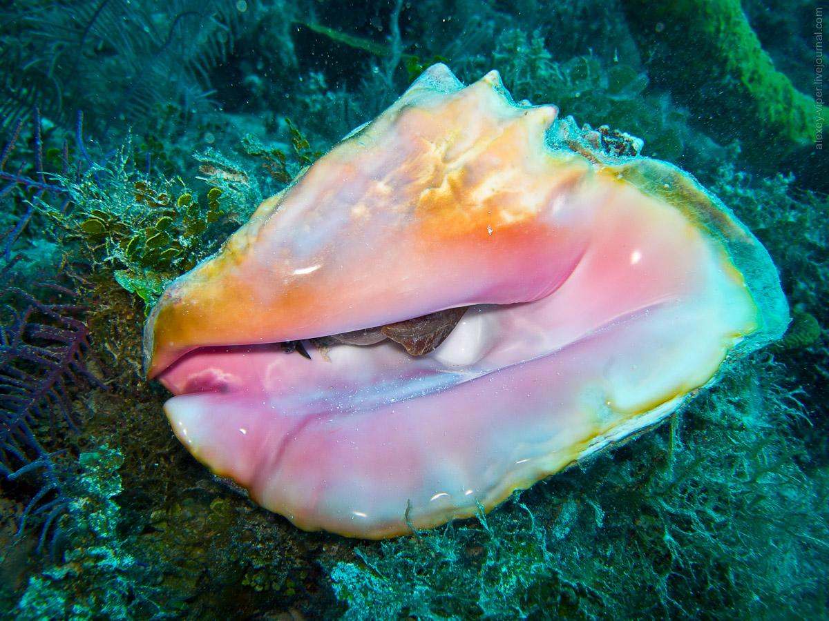 2012.01.12-2012.01.26_dive_safari_[cuba]-diving-014