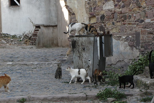 Burhaniye day 2 (Ayvalik): street cats