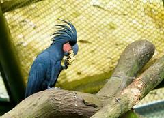 2012-02-06動物園