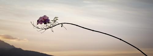sky españa plant flower planta canon landscape spain europa flor paisaje cielo rama ceuta 60d parquedesanamaro
