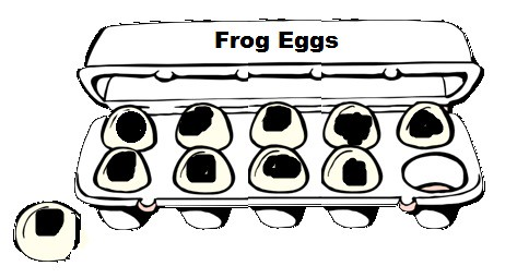 Frog Egg Math