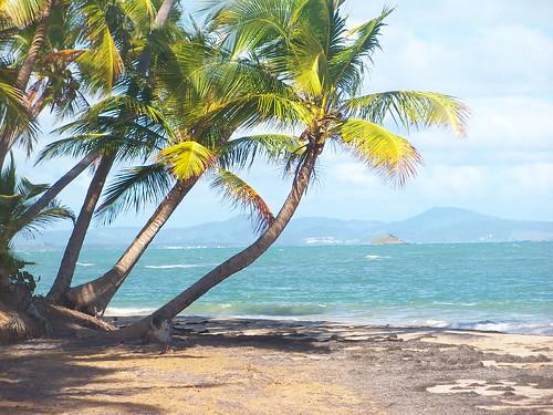 palmasdelmar