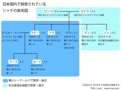シャチの家系図