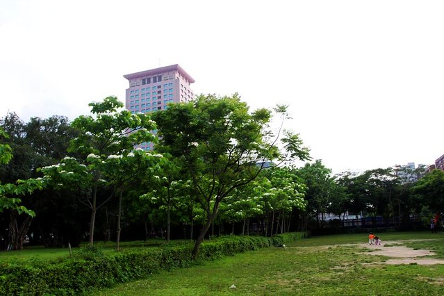 2014 04 13 新北市.板橋.文化路公園.桐花