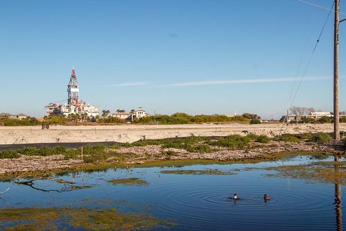 sky bird water duck pond construction portaransas paradisepond redheadduck anthropocene