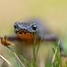 adventurous newt by Tschissl